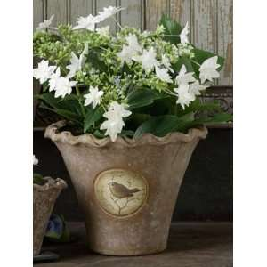 America Retold Notting Hill Flower Pot, Large: Home & Kitchen