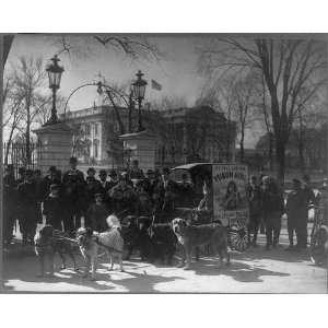 Cart pulled by dogs,advertisement,Yukon Girl,White House