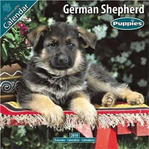 German Shepherd Puppies 2010 Wall Calendar #10205 10 Avonside