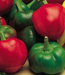 Red Cherry Large Pepper Seeds   30