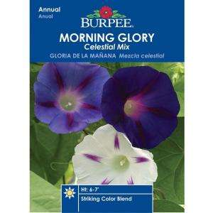 Burpee Morning Glory Celestial Mix Seed 32181