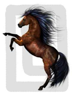 WILD HORSES PONIES PONY STALLION WALL STICKERS DECALS